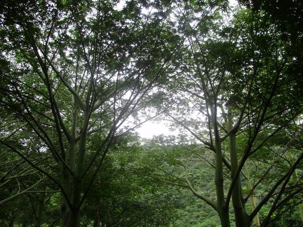 Pudhu Kulam